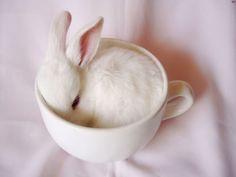 rabbit30