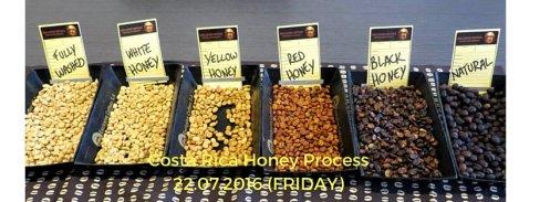 honey-process